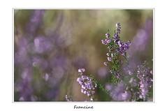 IMGP9812 copie (Francinen89) Tags: fleurs flowers forêt forest automne autumn macro nature proxi rose pink