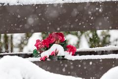Vinter i april (elinjanne) Tags: iverhjelen vinter april 2016