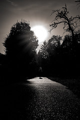 The Walk a7iii tamron28 (DonKamilo1984) Tags: walk black white light sunset girl way path weg abend stimmung moody contrast
