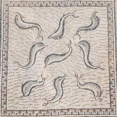 2018/07/09 12h25 mosaïque des Dauphins (détail), maison d'Orphée (Volubilis) (Valéry Hugotte) Tags: 24105 antiquité maroc orphée volubilis canon canon5d canon5dmarkiv dauphins maisondorphée mosaïque mosaïquedesdauphins romain ruines fèsmeknès ma