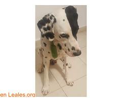 ENCONTRADO EN TENERIFE- SAN ISIDRO (Leales.org • tu guía animable) Tags: adopta adoptar adoptanocompres noalmaltratoanimal adopción sebusca extraviado perdido perro gatos lealesorg