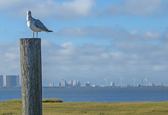 This is MY Perch (marielochphotography) Tags: gull atlanticcity forsythe wildlife refuge marsh post water grass sky blue cloud