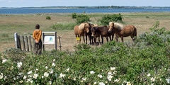 Bøjden Nor (lucico) Tags: 2017 danmark europa day nature fyn denmark pony fence conservationarea mar balticsea ostsee