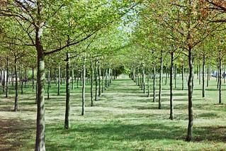 Grid of Trees