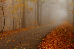 It won't be long (MarcusDC) Tags: burntridgeroad autumn leaves fog