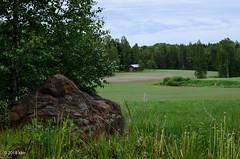 Kivi ja koivu (nousku) Tags: mmp suomi finland sysmä tamron landscape