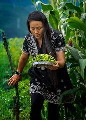 Jenny's Chilies, Yunnan (Rod Waddington) Tags: china chinese hong kong woman yunnan beans corn fence food fresh landscape garden vegetable outdoor people candid