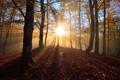 Autumn Vibes (Hector Prada) Tags: autumn otoño forest bosque light luz shadows sombras mist bruma fog niebla sunlight leaves hojas tree árbol woods dreamy basquecountry paísvasco backlight beech hayedo
