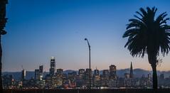 between the palms (pbo31) Tags: sanfrancisco california nikon d810 color september 2018 city urban boury pbo31 skyline treasureisland salesforce sunset transamerica streetlight palm silhouette blue