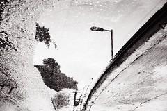 side down (matt.surridge) Tags: filmphotography 35mm 35mmfilm film streetphotography color ektar ektar100 m6 leica japan tokyo shinjuku analogue ishootfilm filmisnotdead streetphotographer streetlife portra400 urban urbanlandscape landscape woods england evening hasselblad501cm square 6x6 mediumformat 120mmfilm 80mmlens street 120mm lifeisstreet streetscene portra saikung hongkong