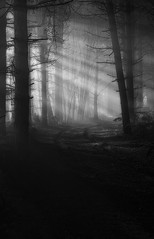 Fantasy (jactoll) Tags: sambourne coughton warwickshire coughtonpark forest woods light lightbeams moody bw black white monochrome sony a6000 70200mmf4 jactoll