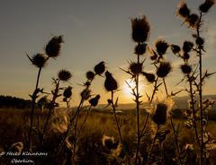 Morgensonne (linuxzwerg) Tags: morgensonne sonnenaufgang morning morningsun sun