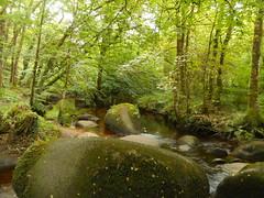 DSCN5573 (norwin_galdiar) Tags: bretagne brittany breizh finistere monts darrée nature landscape paysage