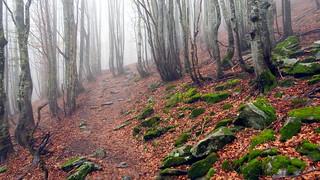 IMG_9062 nel bosco