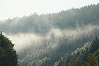 Frühmorgens, Wasserdunst der aussieht wie Raureif / Early in the morning, water mist that looks like hoarfrost