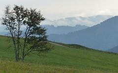 Schauinsland (thobern1) Tags: schwarzwald blackforest foretnoir schauinsland badenwürttemberg germany