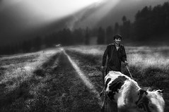 kashmir diary .. (tchakladerphotography) Tags: aruvalley kashmir naturallight travel person cow path field grass blackwhite bw atmosphere mood trees evening misty