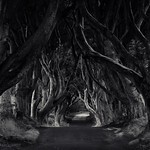 The Dark Hedges, Northern Ireland. A magical place on the Atlantic coast. thumbnail