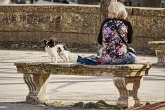 La maîtresse et son chien (Xtian du Gard) Tags: xtiandugard nîmes gard france jardindelafontaine banc animaux chien