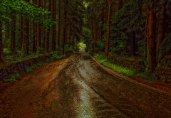 Wet Woodland (xDigital-Dreamsx) Tags: nature landscape rain rural countryside country road street walking forest wall trees water