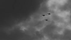 jets in black (Darek Drapala) Tags: jet plane panasonic poland polska panasonicg5 sky clouds airplane bw blackwhite lumix light