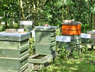 Honey Bee Hives, Yorkshire, UK, 01072018, EOS 1Ds, Jcw1967 (3)