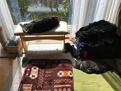 Sleeping Cats (sjrankin) Tags: 12september2018 edited kitahiroshima hokkaido japan animal cat tigger bench window reflection argent mat zabuton cushion sleep