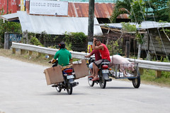 Unusual Transport_05 (DepictingPhotos) Tags: asia bohol humour motorbikes philippines pigs street transport