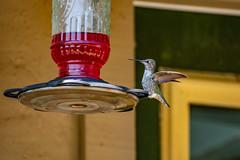 DSC_0363 (Eric Bloecher) Tags: bird wildlife backyard feeder