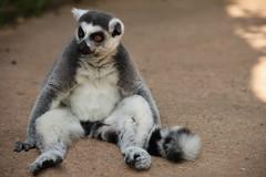 IMG_4376 (gabrielgs) Tags: holiday holiday2018 vakantie2018 camping frankrijk france zoo la fleche lafleche animals dierentuin loire