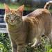 Cute orange cat with green ezes