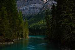 _DSC0663 (marcella.cavelli) Tags: canada britishcolumbia alberta squamish whistler banff jasper clearwater sky falls tree hike hiking trail trip snow lake wood ab bc