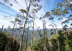 Through the Trees (tessa.kyren) Tags: blue mountains trees landscape clouds australia nsw australian green greenery nature ranges trek fine art photo print