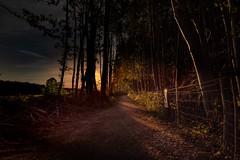 Going Home (Victor Burclaff) Tags: sunset evening autumn path plantation coppice fence track