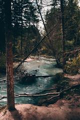 RIVER (LighthouseFair) Tags: nature river tree albero fujifilm gobe