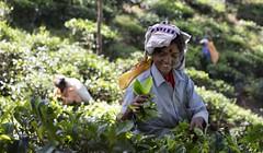 Tea Time (craigkass) Tags: srilanka asia ella tea teapicking teaestate