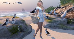 sunday with puffins and albatrosses (nicandralaval1) Tags: una weloveroleplay nomatch 7deadlyskins skin alohafair exia purepoison gift freebies tlc beach yokana tentacio {zoz} kate maitreya fashion secondlife secondlifefashion gypsychic it designercircletheevent mooh enchantmenthunt hunt hive capeflorida lelutka bento mesh firestormviewer