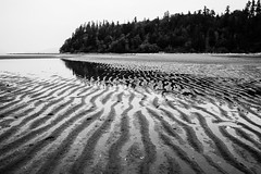 after the rain (bluechameleon) Tags: pointgrey sharonwish wreckbeach beach blackandwhite bluechameleonphotography landscape melancholic moody mountains nature ocean reflections ripples sand trees water waves forest sky lines texture ngc skancheli