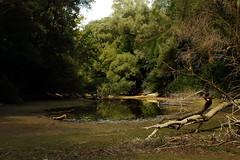 Drought   #Flektogon35 (DJ-Lerry von Kolossy) Tags: flektogon duna göd homoksziget river czj zeiss drought aszály