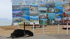 Afternoon nap (sijisu) Tags: sun cloud horizon recreation seashore coastline beach fair weather lifeguard hut sunset island dog