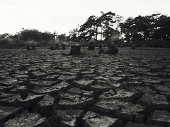 drought (no49_pierre) Tags: lake bed ven film medium format