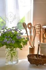 afternoon light (snowshoe hare*) Tags: dsc0967 kitchen flower flowers vase curtain light afternoon conocliniumcoelestinum bluemistflower eupatoriumcoelestinum ユーパトリウム ユーパトリウム・セレスチウム cozy