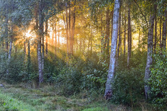 Good Morning Sunshine (A:L) Tags: sunshine quotes forest trees woods morning sun