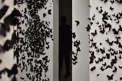 Darkman (Karen Scarlett Delgado) Tags: butterfly mariposa animal bw geometric musseum museo muac cu unam cdmx vertical nikon d3400 art dark insect