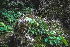 DSC_0090 (Hilðr) Tags: mountains trees rocks forest woods view horizon canyon hills pine stones moss norse inspiration spirit hiking dark