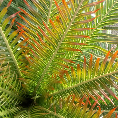 (Rainbowfish7) Tags: royalbotanicgardenskew kew nature ferns colour princessofwalesconservatory