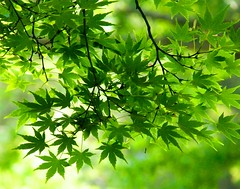 Green Leaves (Stanley Zimny (Thank You for 32 Million views)) Tags: seasons green leaves spring