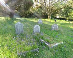 Grave! ('cosmicgirl1960' NEW CANON CAMERA) Tags: llanhydrock nt cornwall nature yabbadabbadoo green 15challengeswinner