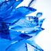 Silk flower - Explored