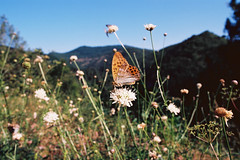 (Pancho __) Tags: 21mm rokkor minolta xd7 xd11 kodakektar100 film nature pesticidefree avène
